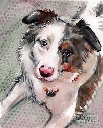 australian shepherd yoga video australian shepherd blue merle painting by maria u0027s watercolor
