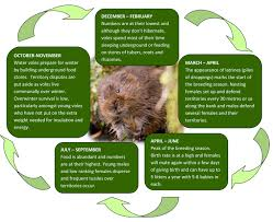 water vole frequently asked questions the wildlife trusts