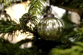 free images branch leaf flower green botany fir lighting