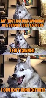 Orange Dog Meme - bad pun dog my first job was working in a orange juice factory i