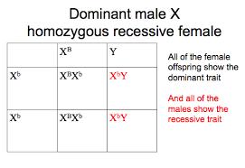 Chromosome Color Blindness Chapter 11 Mendelian Genetics Biology As If It Mattered