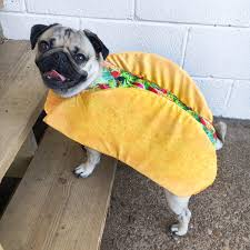 nationaltacoday hashtag on twitter pugs pinterest twitter