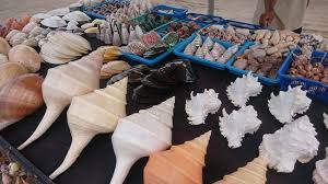 where to buy seashells you can buy seashells beside the hotel picture of w bali