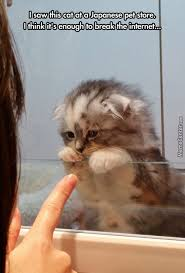 Sad Kitten Meme - awwww ill take 10 makes me sad aww