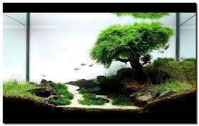 idee deco aquarium aquascape aquarium designs http www hikris com 7217 aquascape