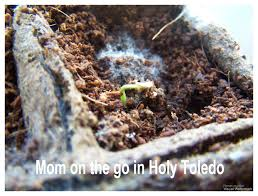 Greenhouse Starter Kits Earth Day Miracle U2013 Mom On The Go In Holy Toledo
