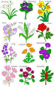 best 25 september birth flower ideas on pinterest june birth