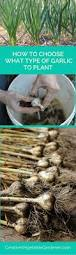 154 best images about gardening on pinterest gardens hydroponic