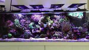 Fluval Sea Marine And Reef Led Strip Lights by Zetlight Aquarium Article Digest