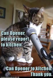 Lol Cat Meme - please report lolcats lol cat memes funny cats funny cat