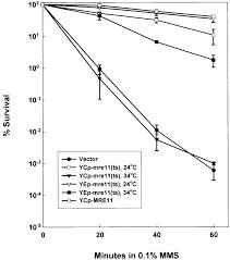 the saccharomyces cerevisiae mre11 ts allele confers a separation
