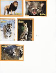 free 6 national geographic trading cards big cats trading