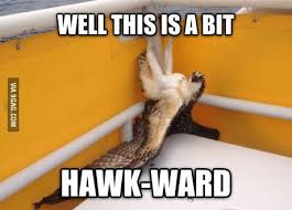 Hawkward Meme - hawkward meme animal cuteness pinterest meme and memes