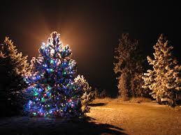lighted tree there are more trees outdoor on