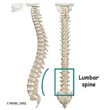 Human Vertebral Column Anatomy Winchester Hospital Chiropractic Woburn Ma