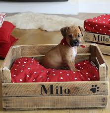 Best 25 Crate Bed Ideas by Best Dog Crate Beds Ideas On Pinterest Dog Crate Dog Crates Dog