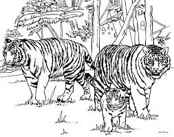 Baby Jungle Animals Coloring Pages Of Tigers Coloring Book Coloring Pages Tiger