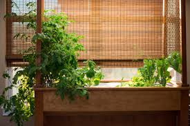 indoor garden sassy susan creates