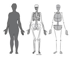 The Human Body Picture Paint Draw Paint Learn To Draw Drawing Basics Simplified