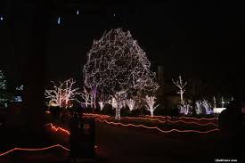 Zoo Light Dc by Cleveland Zoo Christmas Lights Christmas Lights Decoration