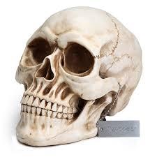 readaeer life size replica realistic human skull head bone model