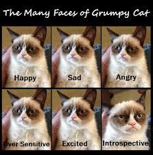 Grumpy Cat Snow Meme - grumpy cat by suzukeii on deviantart