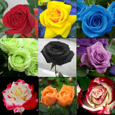 online buy wholesale mini rose plant from china mini rose plant