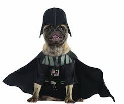cute dog halloween costumes costumes for toy breed dogs