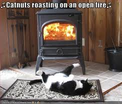 Fireplace Meme - catnuts roasting on an open fire i can has cheezburger