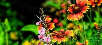 buy native grow native indiana landscaping with native plants with chad washburn naples