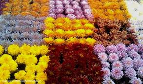 top 10 must visit flower shows in india