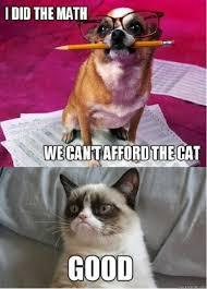 Cat And Dog Memes - cat v dog by james pinkerton