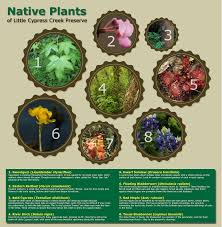 native plants of texas native plants of little cypress creek preserve visual ly