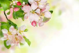 blooming spring background gallery yopriceville high quality