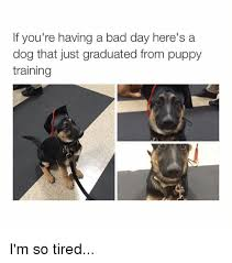 I M So Tired Meme - if you re having a bad day here s a dog that just graduated from