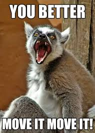 Lemur Meme - move it meme it best of the funny meme