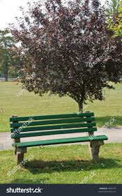 park bench sitting by small tree stock photo 3963175 shutterstock