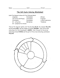 Mitosis And The Cell Cycle Worksheet 008118638 1 F95bf0f32affc5ff63b89d7f656f2006 Png