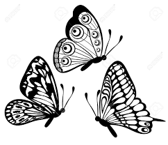 set of beautiful black and white butterfly isolated on white