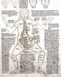 Pregnant Female Anatomy Diagram Anatomy Wikipedia
