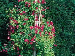 build a garden obelisk sunset