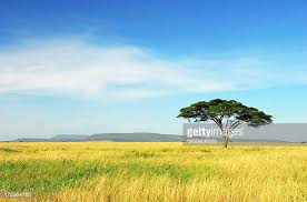 plain stock photos and pictures getty images