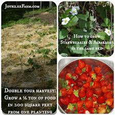 Strawberry Garden Beds How To Grow Strawberries And Asparagus The Permaculture Way