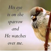 his eye is on the sparrow and he watches me meme on sizzle