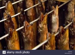 smoked eels stock photos u0026 smoked eels stock images alamy