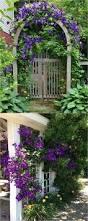 35 best vines for your yard images on pinterest garden plants