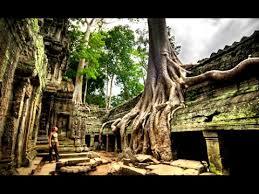 ta prohm cambodia temple angkor trees