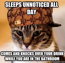 Funny Cat Memes Tumblr - funny cat memes tumblr cat world deborah pinterest funny