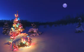 Christmas Trees With Lights Christmas Trees In The Snow Christmas Lights Decoration