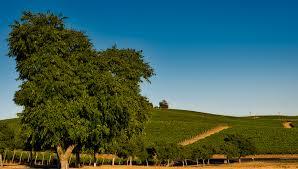 free images landscape tree nature sky vineyard field farm
